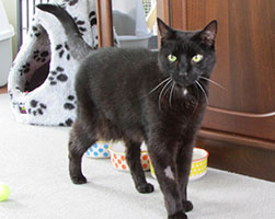 sooty-foster-care-billie
