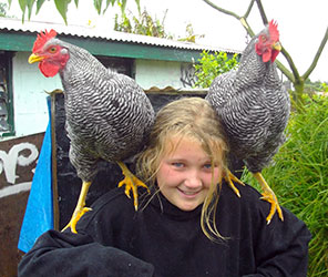roosters-puff--tony-on-shoulder-lesleyann-w